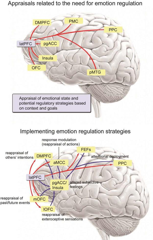 Emotion and the prefrontal cortex: An integrative review.